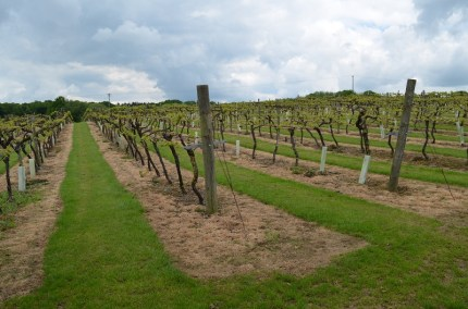 Ortega Vines