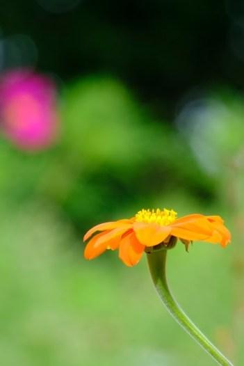 12.yellowflowerrl