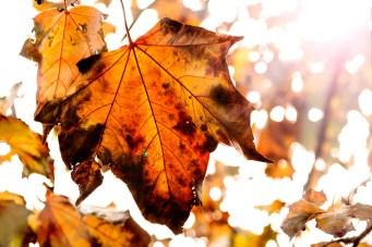 djw-autumn02