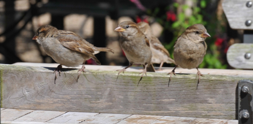 es--sparrowshydehall
