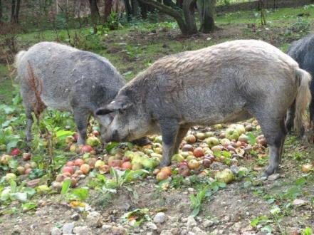 hatfieldhouuse--porkwithapplesauce