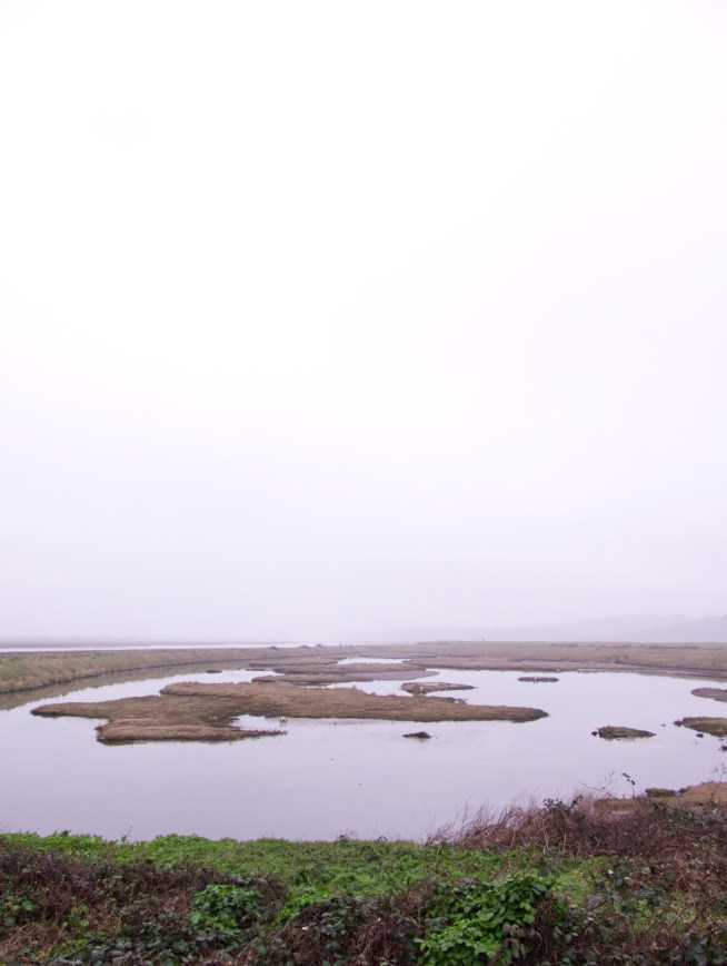 A misty Two Tree Island lagoon