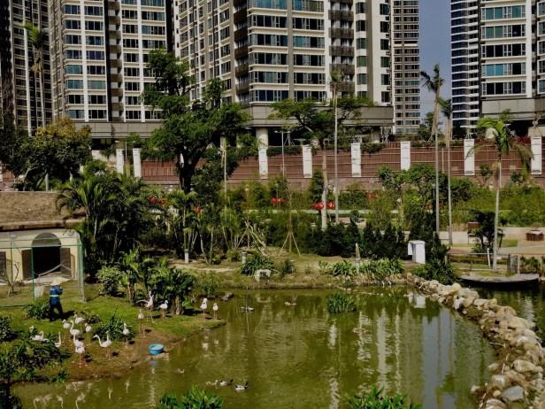 Flamingo enclosure Seac Pai Van Park Coloane Island Macau