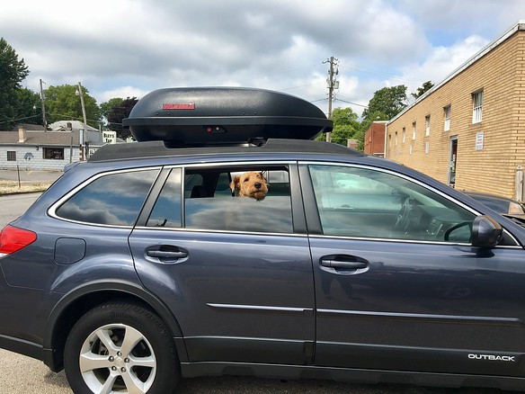 Bailey ready for our road trip!