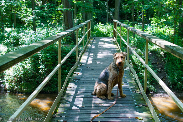 Dog-Friendly Hike at Bicentennial Woods, Fort Wayne, Indiana