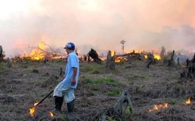 Konservasi dan Rehabilitasi Lahan Gambut: Kunci Penurunan Emisi Gas Rumah Kaca Nasional