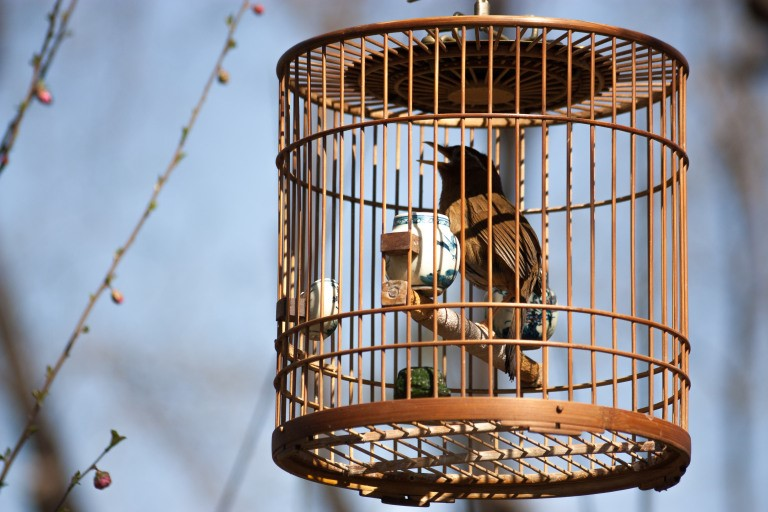 Does the caged bird in Beijing still sing? Photo © Timothy Van Gardingen