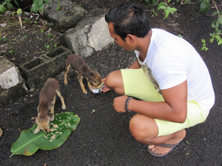Arvind feeding emaciated puppies in the parking lot of a Hindu temple in Mauritius. (Photo: Maximilian Georg)