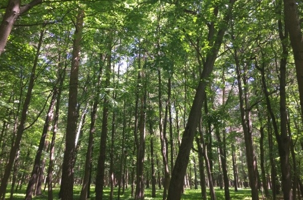 Forests to give the Auenwald a run for its money. (Photo: Holly Doran)