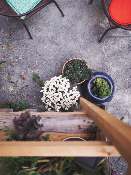 Café Oink perspectives. (Photo © Lisa Striegler)