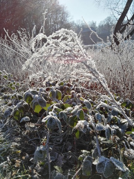 Leipzig in winter. (Photo by Chrissy Orlowski)