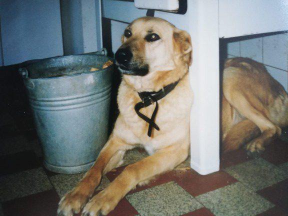 Senta, farm dog