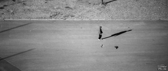 Walking the gull