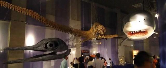 国立科学博物館 海のハンター 混雑