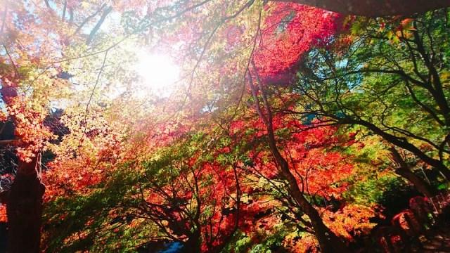 高尾山 紅葉 混雑