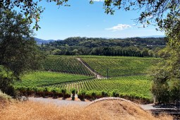 A Weekend in Napa, CA
