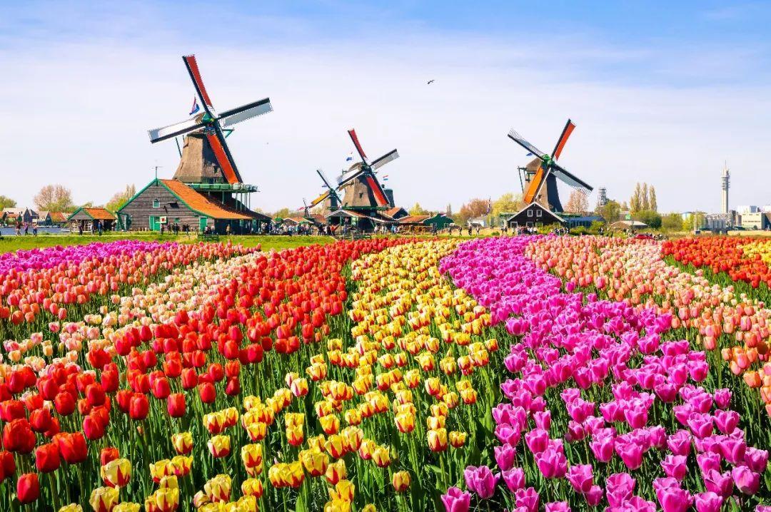 在温哥华申请荷兰申根签证
