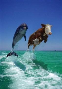 vaca-golfinho