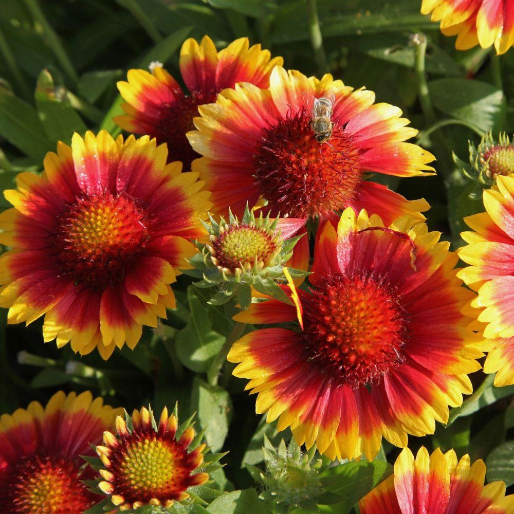 un massif de fleurs vivaces