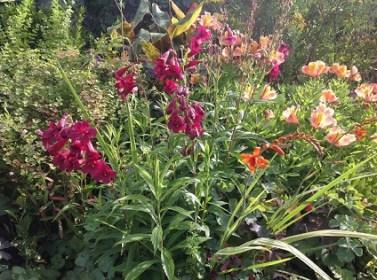 fleur d'antan jardin d'epices