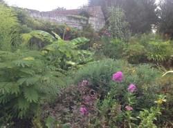 albizia, massifs d'été le jardin d'épices Laurent Lafaille