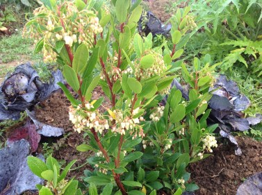 arbousier jardin exotique le jardin d'épices