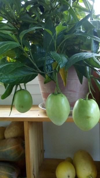 Melon poire, le Jardin d'épices