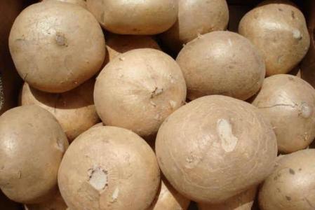 Le jicama, un curieux légume