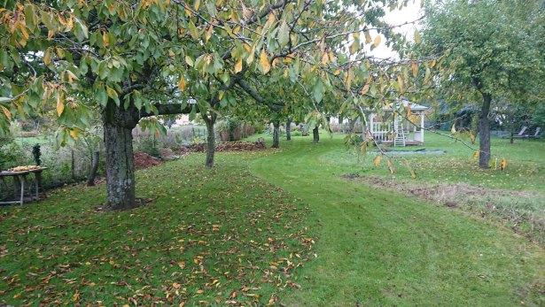 Tonte, mulch et feuilles