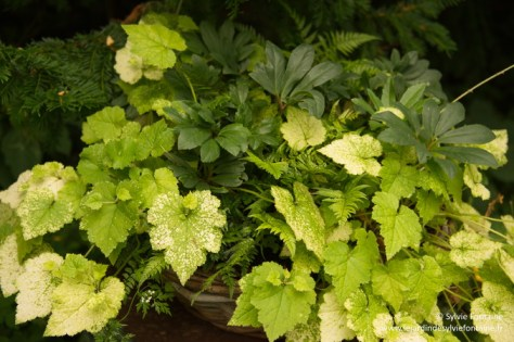 tenue d'été pour création florale d'hiver au jardin de sylvie fontaine