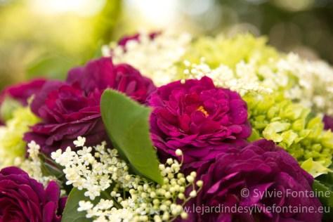 Bouquet de roses Gypsy Boy et Sambuccus nigra