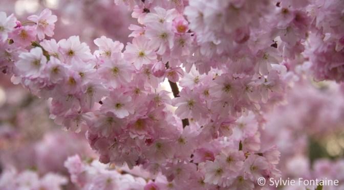 Pour voir la vie en rose