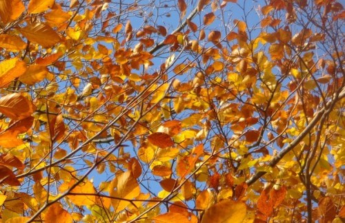 leaves-358559_960_720