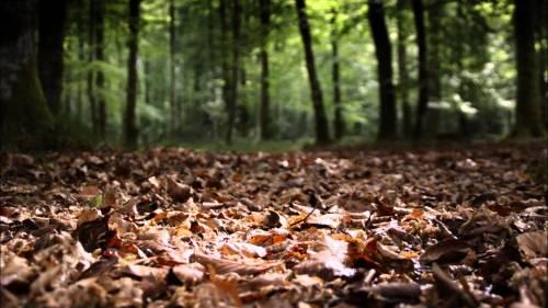 Vous vous souvenez de vos cours sur lhumus en 6ème? Ce tapis de sol mélangeant feuilles, autres débris végétaux et sol? Cest en fait un composteur géant, grouillant de vie, indispensable au recyclage de la matière.