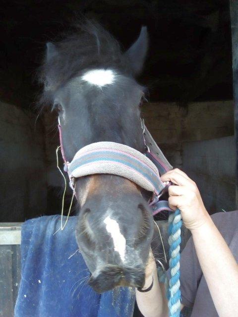 cheval à moustache