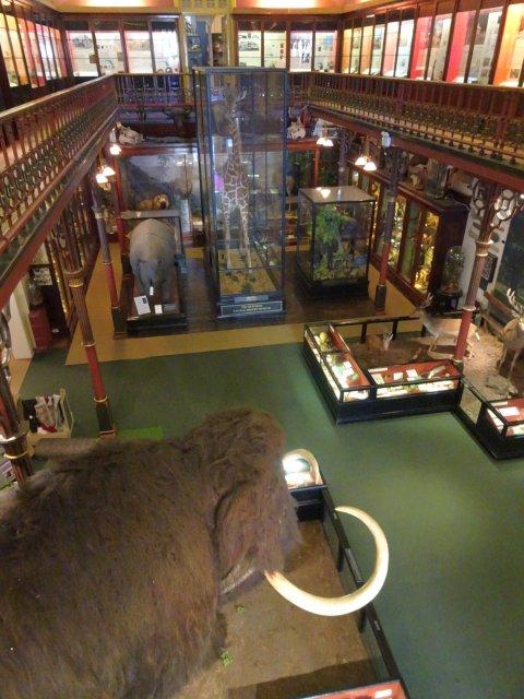musée à Ipswich