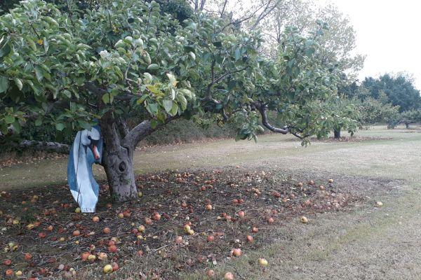pommes et art