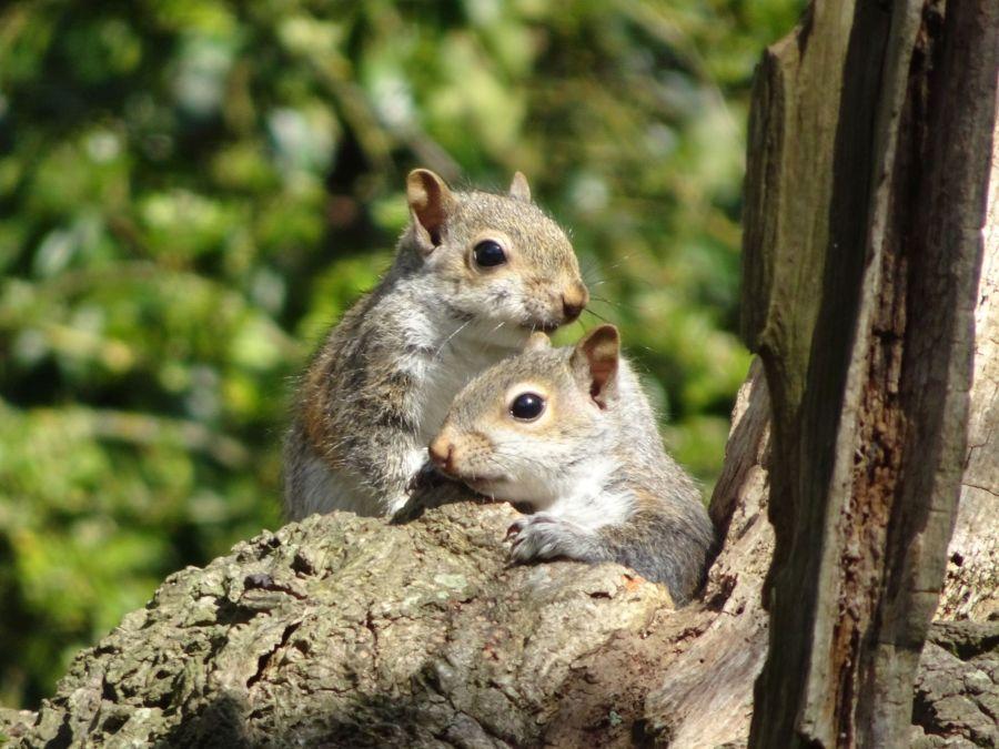 bébés écureuils dans un nid