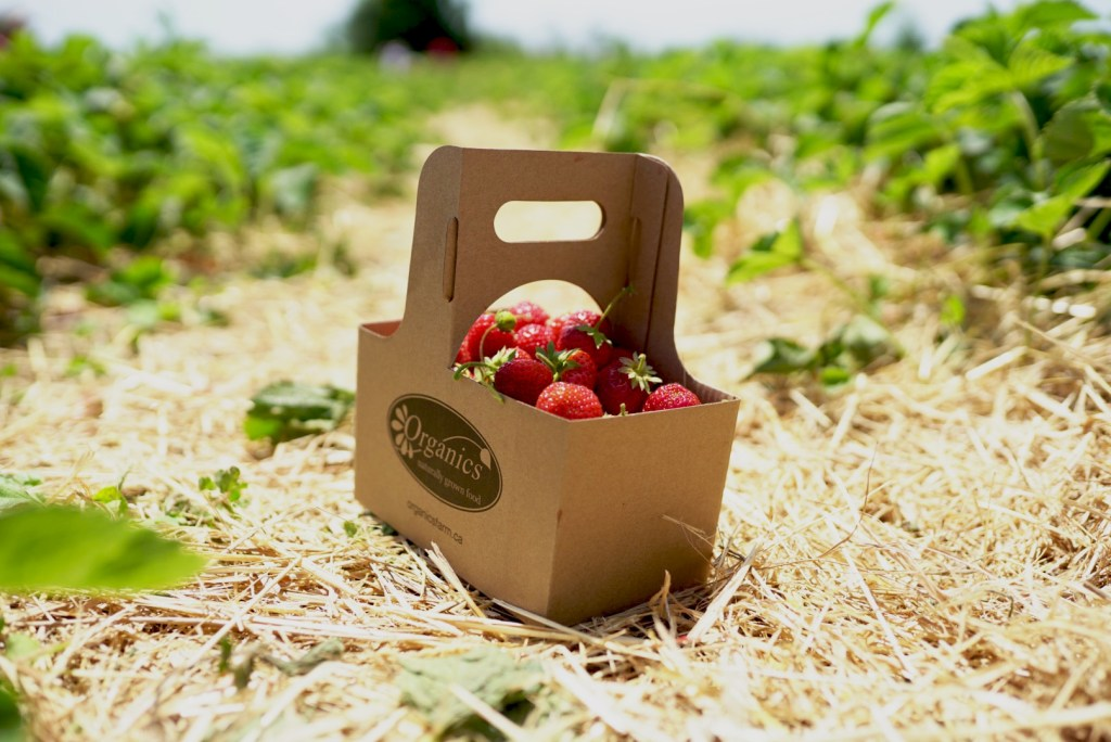 Corrugated boxes are great for the fruit picking industry because they are cost effective, biodegradable and easy to transport!