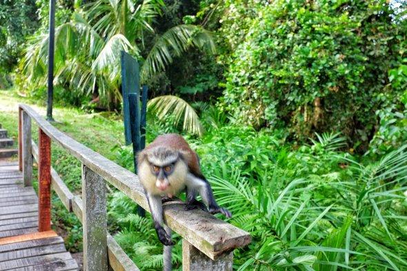 Image result for Lekki Conservation Centre