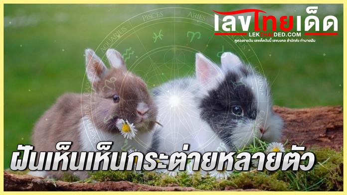 ฝันเห็นเห็นกระต่ายหลายตัว
