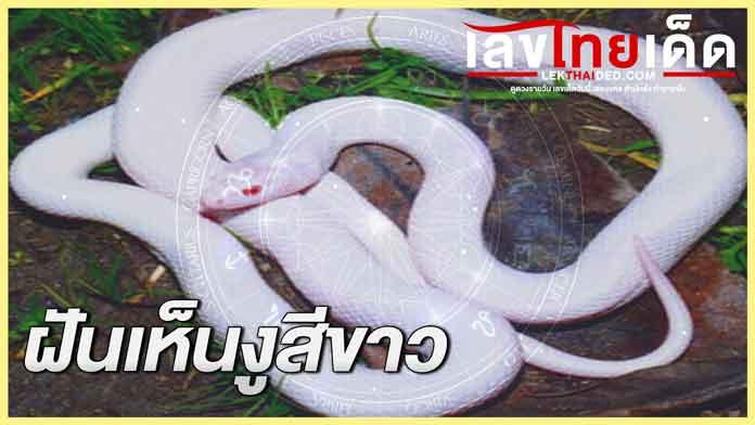 ฝันเห็นงูสีขาว