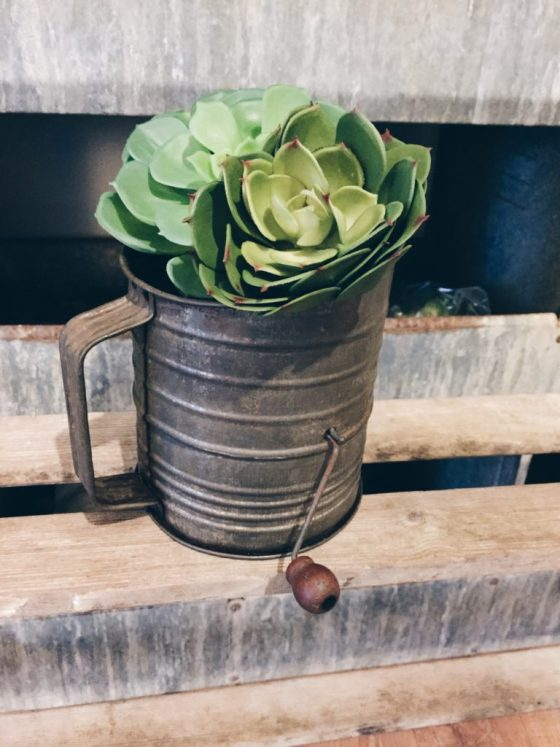 Succulents make the perfect party favors