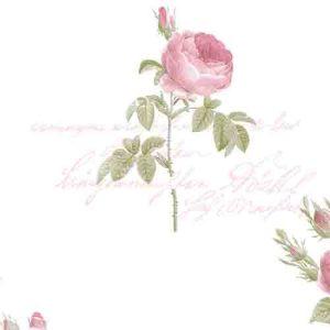 CG28820 Patton Wallcoverings Rose Garden 2 Rose Script Wallpaper White