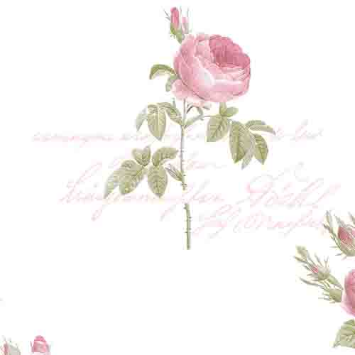 CG28820 Patton Wallcoverings Rose Garden 2 Rose Script Wallpaper White