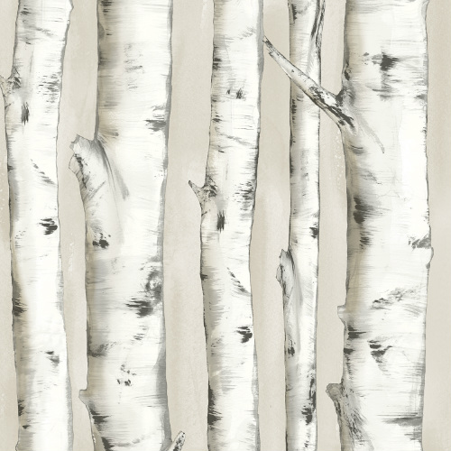 3118-12601 rewster Wallcovering Chesapeake Birch and Sparrow Pioneer Birch Wallpaper Off-White