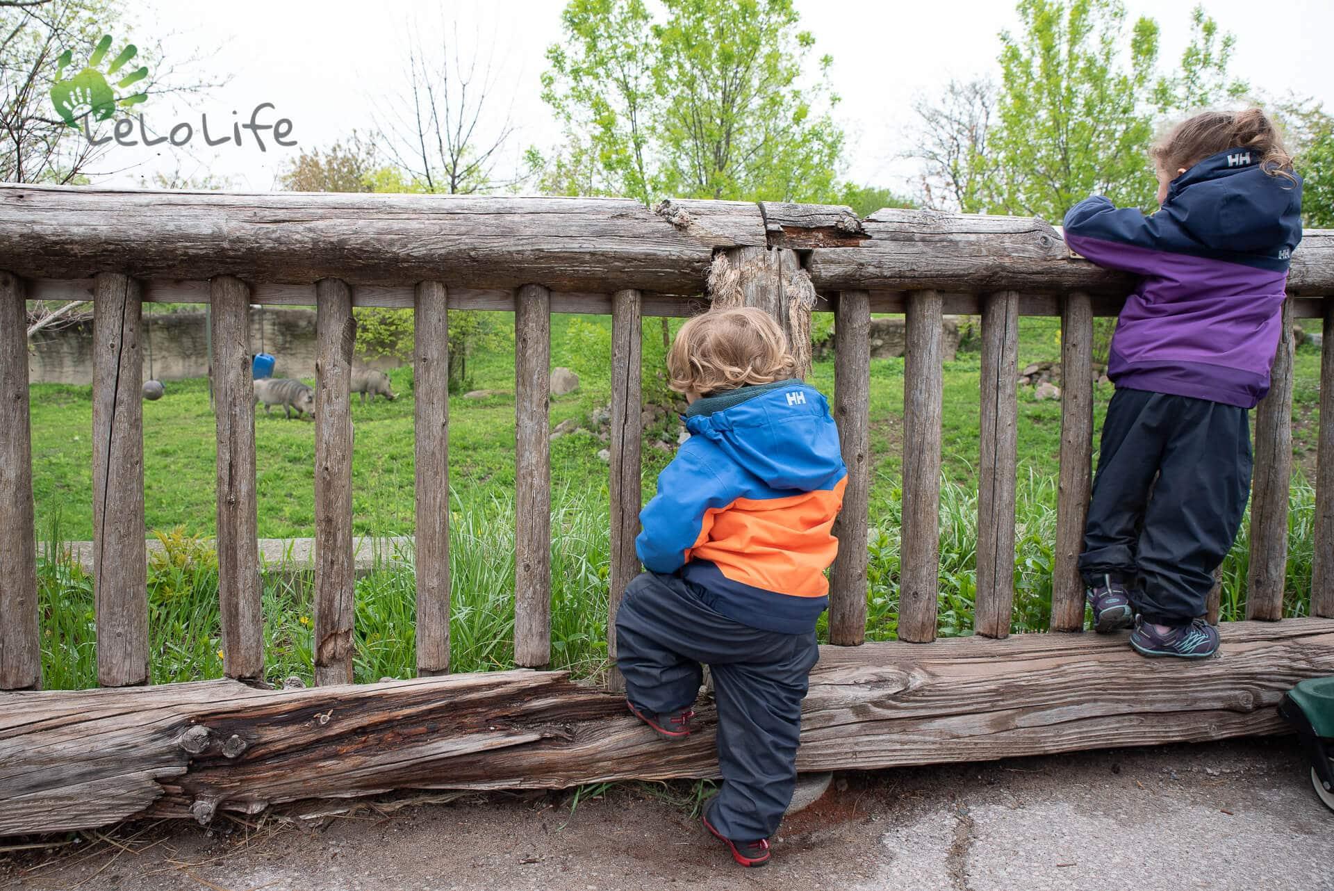 LeLoLife - Marcher avec les enfants - Observations au Zoo de Toronto