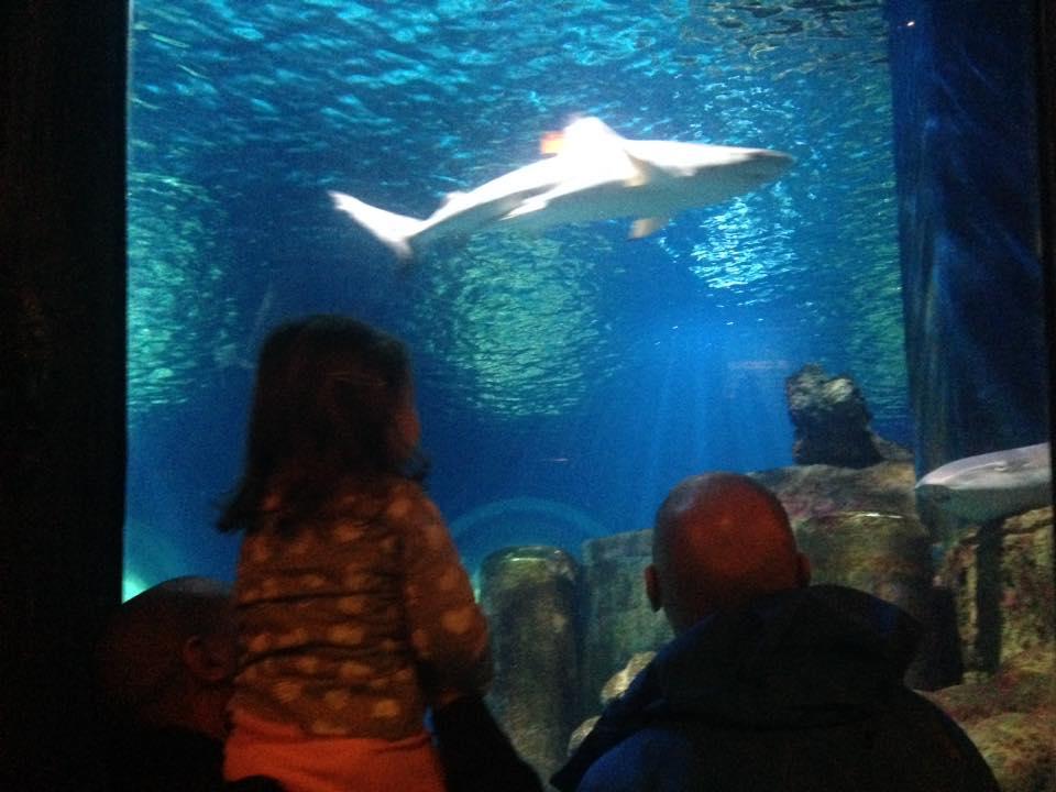 Aquarium SEA LIFE Val d'Europe