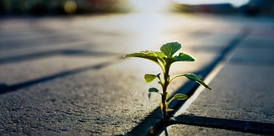 La croissance par le mindset