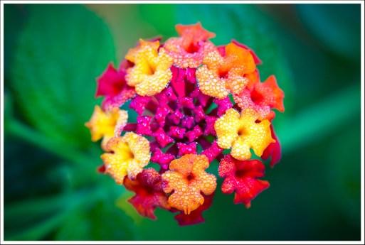 Colorfull Flower